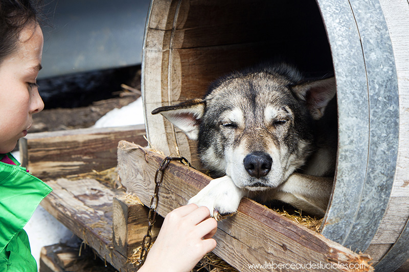 Angaka chiens de traineau