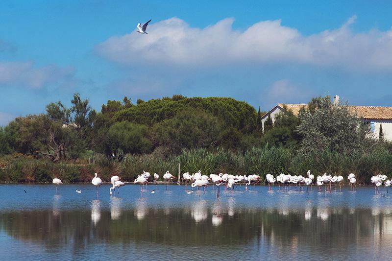 parc ornithologique saintes maries de la mer