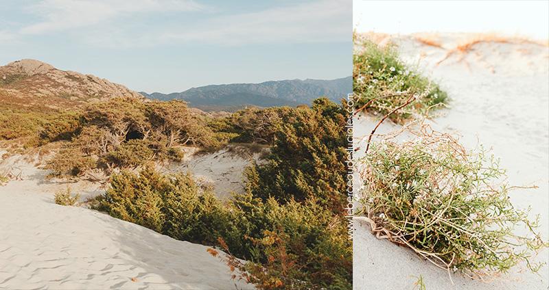 dunes-sable-plage-ostriconi